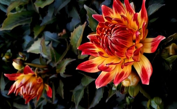 Chrysanthemum Flower - David Finch