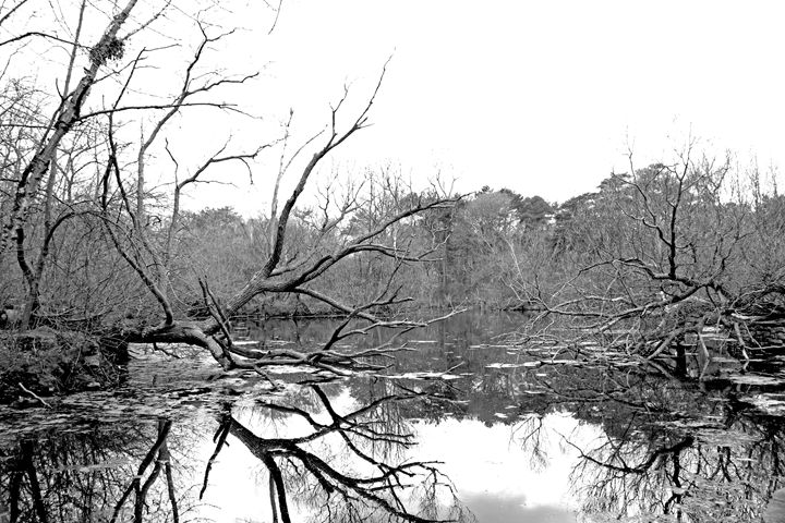 Fall Trees B&W - Dacosta