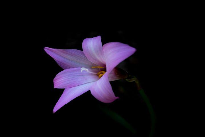 Pink - Judith Lee Folde Photography & Art