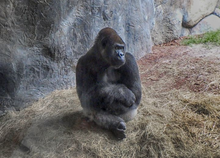 Gorilla Pose - Judith Lee Folde Photography & Art