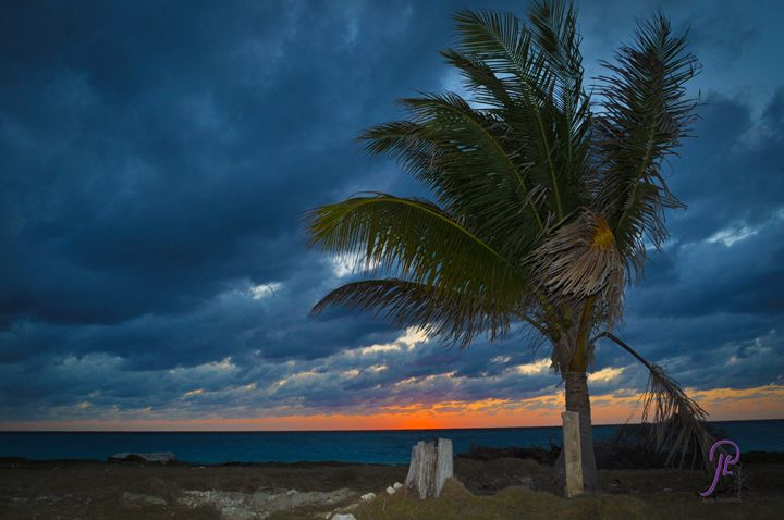 Coconut Tree @ Sunset - Lyle Saunders Photography