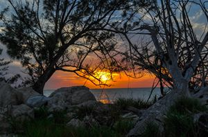 Living & Dead Pines @ Sunset Bimini
