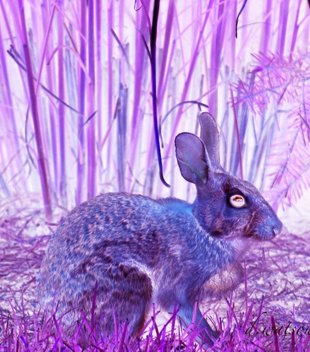 Blue Bunny - Darlene Watson