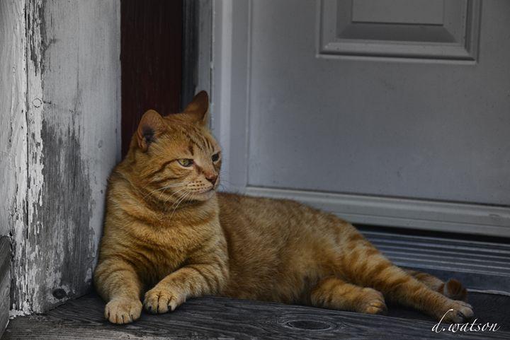 Ginger Waiting - Darlene Watson