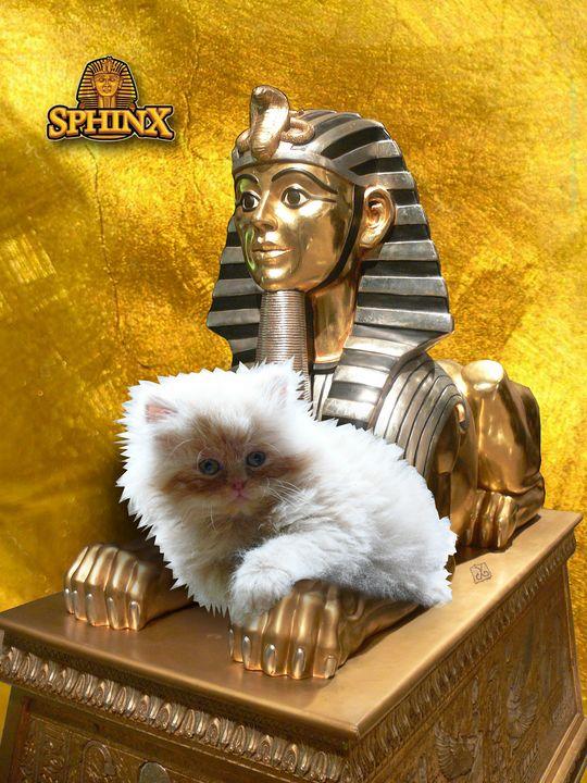 Egyptian Sphinx and Aris The Cat - Vanyssa Design
