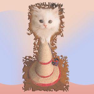 White Persian Cat Vanda