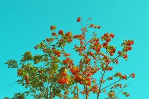 Mandarine by #Bizzartino