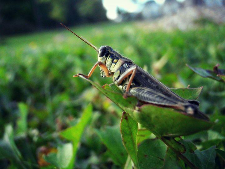 Grasshopper - Soulluring