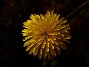 Bright Yellow Petals