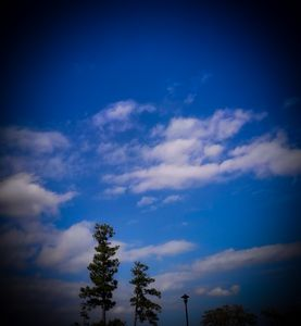 Tall Trees on a Cloudy Skyscape