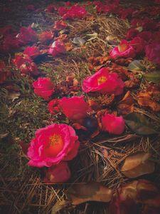 Fallen Petals, Grassy Floor