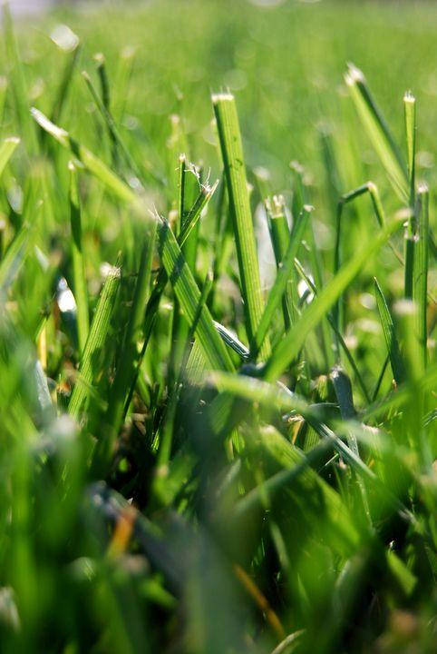 The War Torn Grass - Aaron Zaremsky's Photography