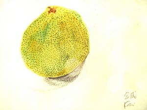 画柚子 家威绘画 How to Draw Pomelo by Kavi