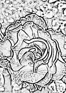 Abstract Rose 1
