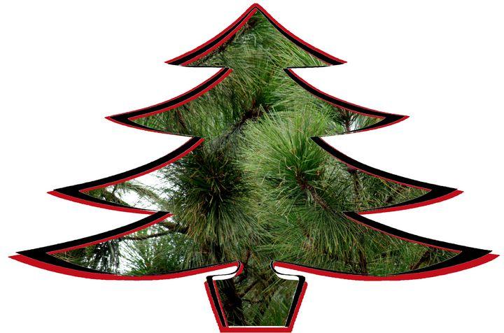 Christmas Tree Cutout - My Favorite Photography
