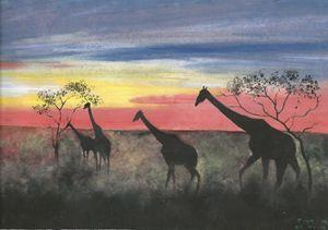 Sunset On Giraffes