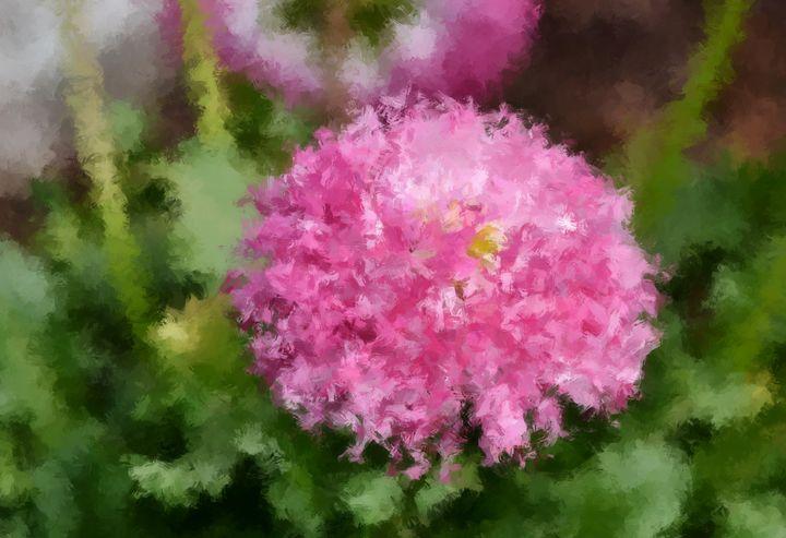 Pink China Aster - Aleksandra JJ Galery