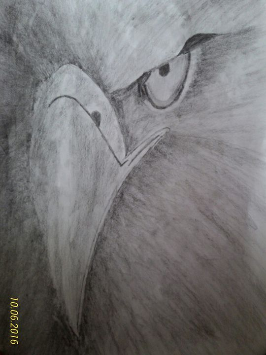Eagle sketch - S. Rawat