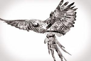 Macaw Tree - Jesse Ladig