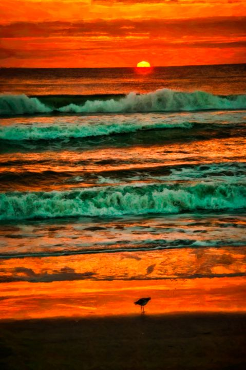 sunrise sand piper - Beach People