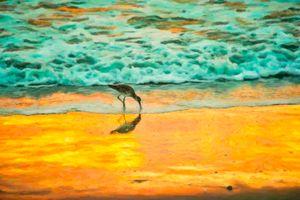 Cocoa Beach Plover Art - Beach People