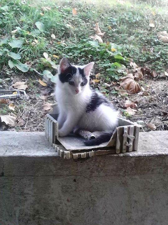 Cass the Cat - A. Loftis
