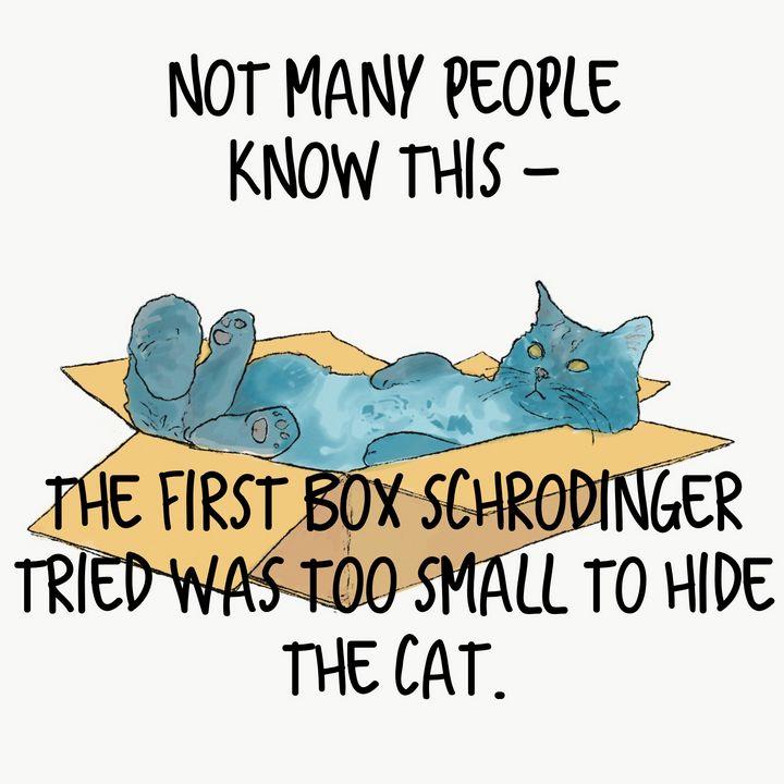 Lazy cat - Nodicenodice