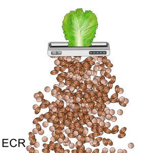 Shredded Lettuce - Animated Spirit