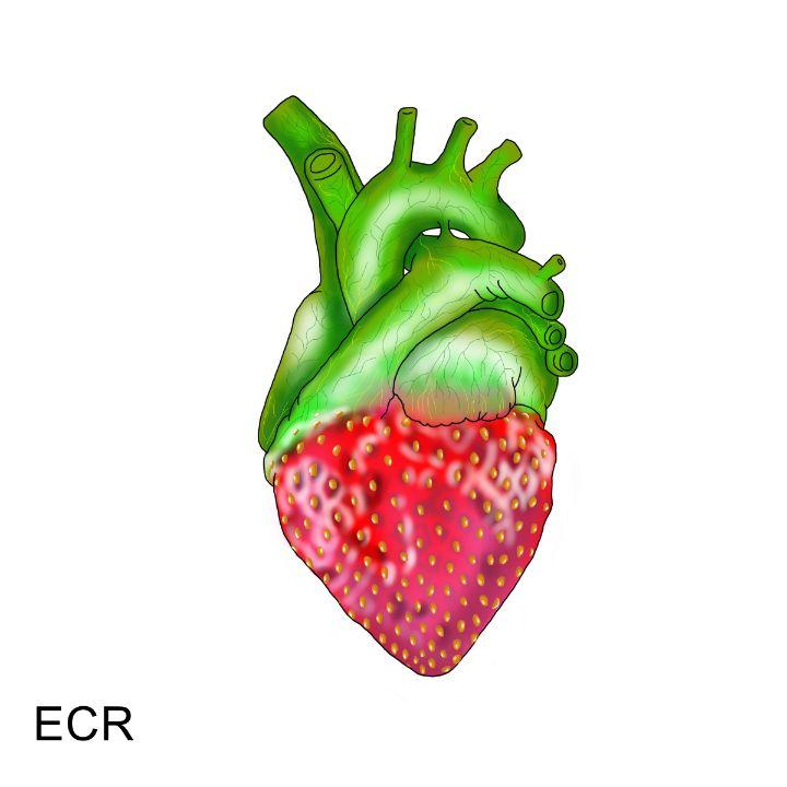 Heart Berry - Animated Spirit