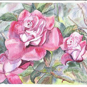 Three Roses - dollyannbrooks