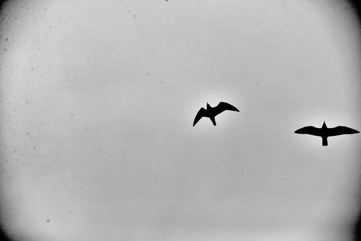 Seagulls - Metempsychosis