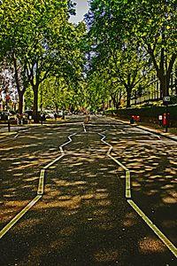 London Trees