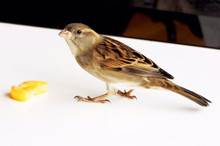Bird in paris - Madison White