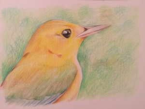 Yellow bird