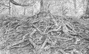 Roots Matrix