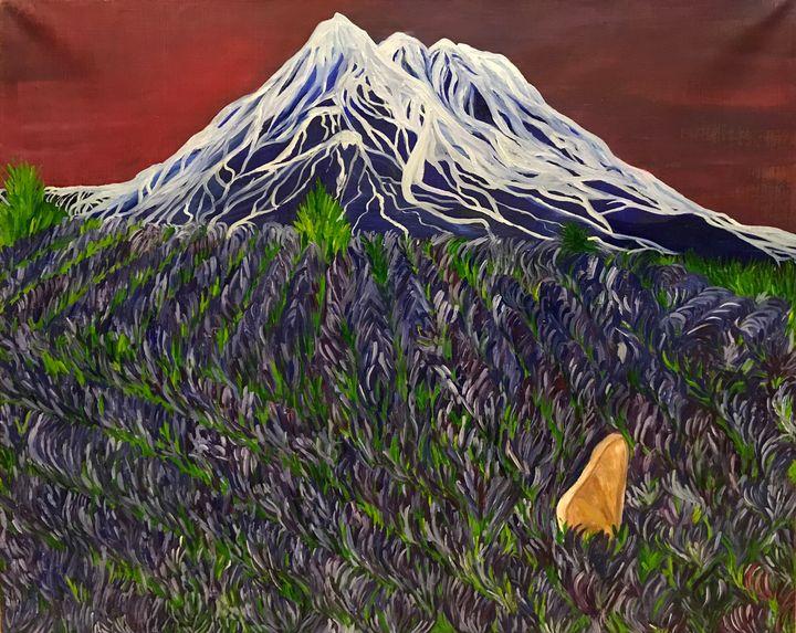 Lavender fields - Alina Morozova