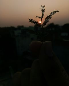 Burning dusk
