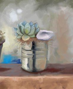 Tin Can Succulent
