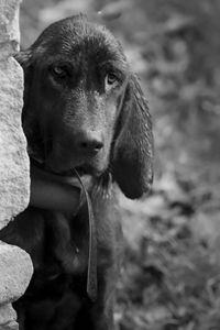 Abandoned Hound - HF Photography