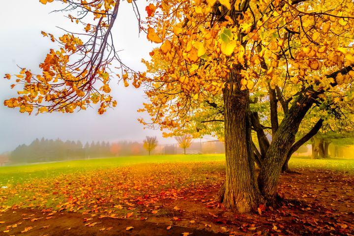 Golden Autumn - George Lai Studio