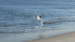 The Seagull at Landing