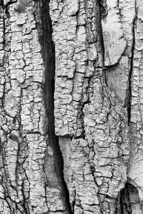 Wood - Life