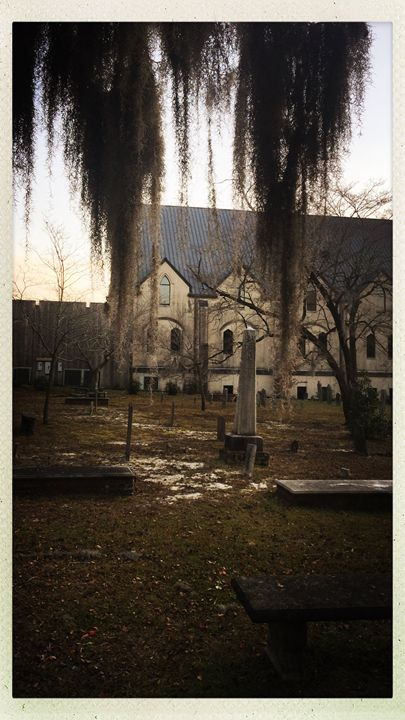 St James Cemetery Spanish Moss - Haus Collins