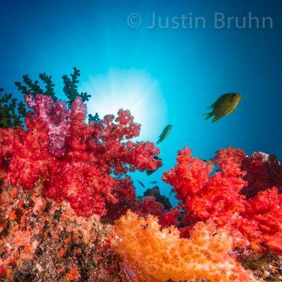 Reef Magic - Pure Underwater Imaging