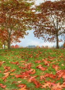 Autumn foliage near to far
