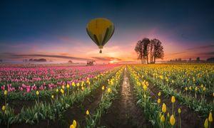 Hot air balloon over tulip field