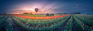 Sunrise, balloon, moon and tulips