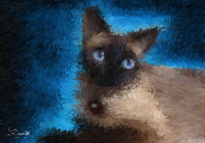 Blue eyes - David SBV