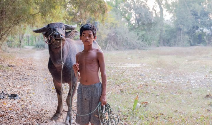 A boy with his buffalo - Nathan Jones