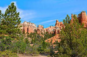 Bryce Canyon Beauty Wall Art